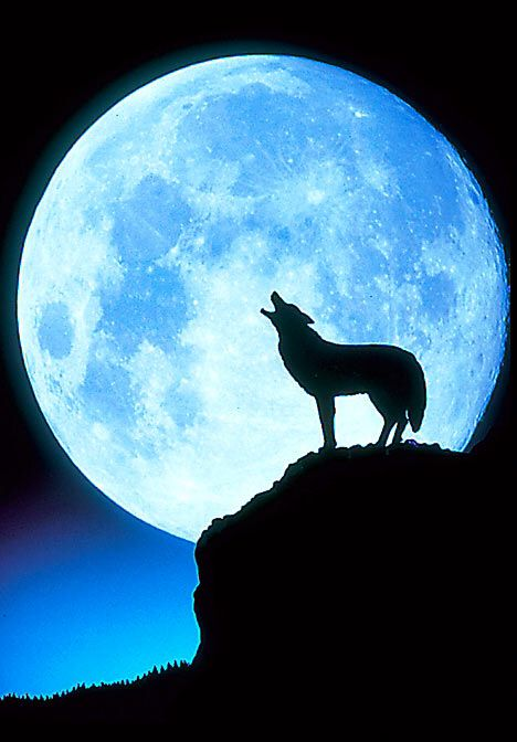 A blue moon and a wolf-Nicole Lyons/ The LithiumChronicles