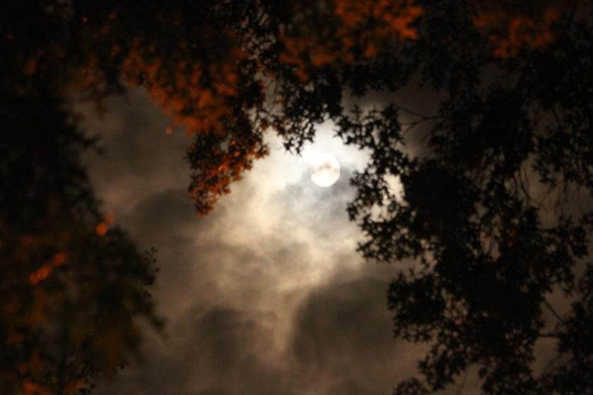 moon-1736608