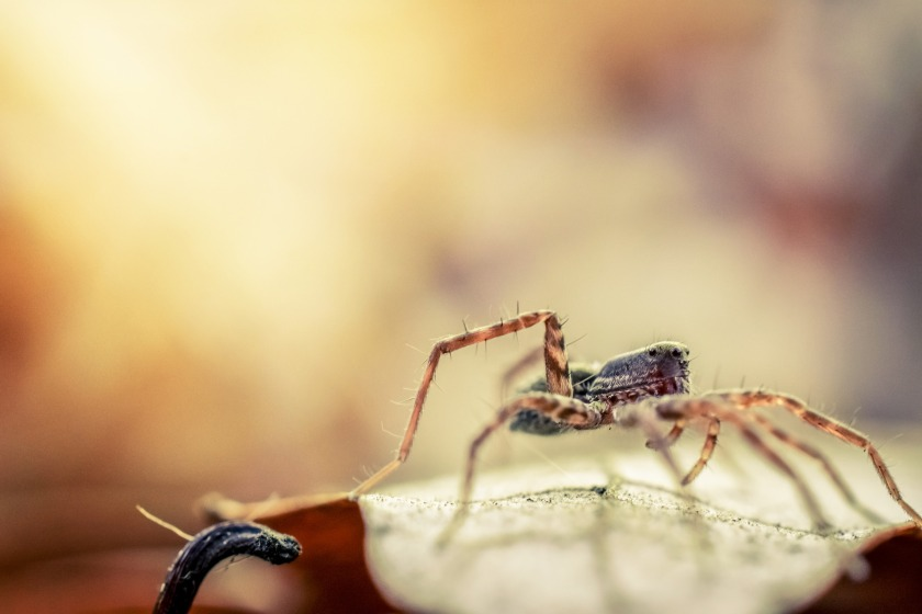 spider-1915344_1920