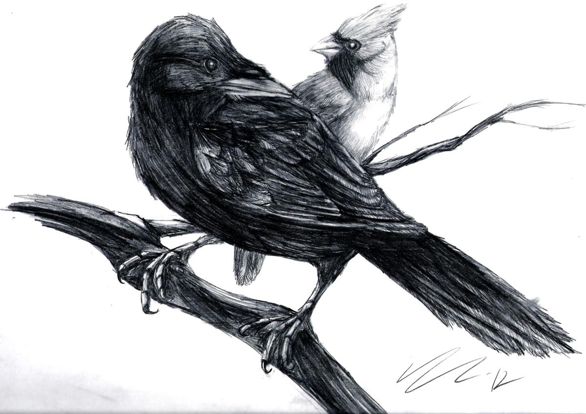 Crow Black and Cardinal Red Kindra M. Austin & MatthewEayre